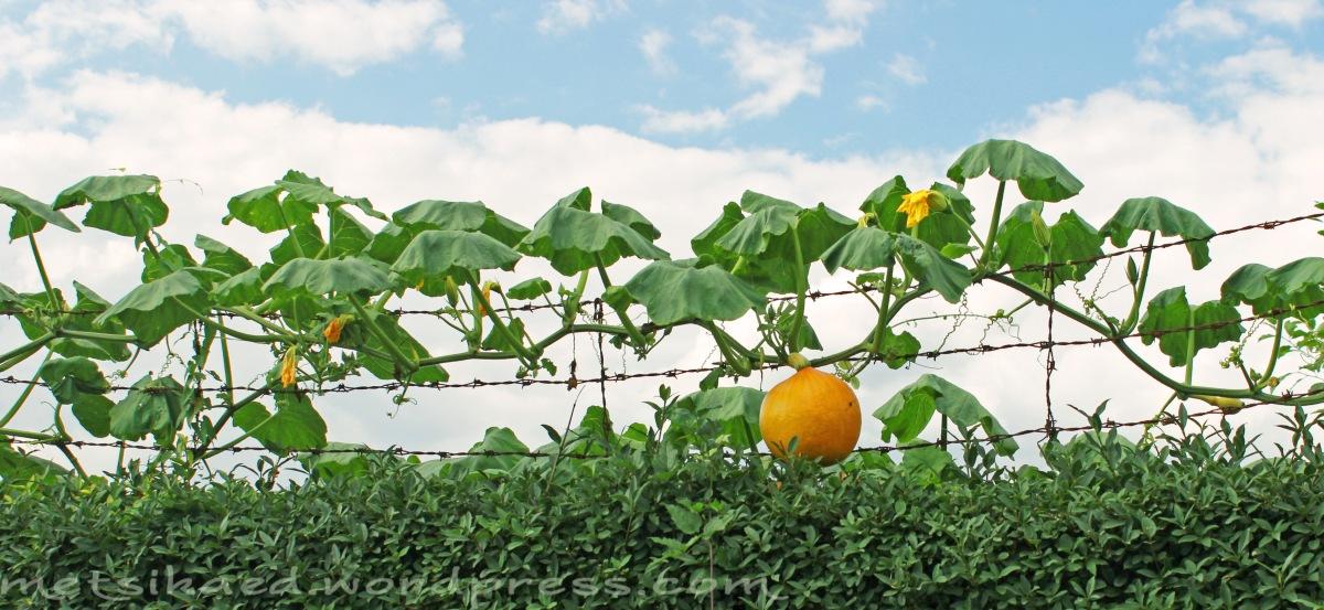 Vegan aiandusmeetodid