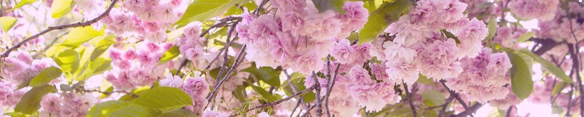 Sakura ja rododendronid