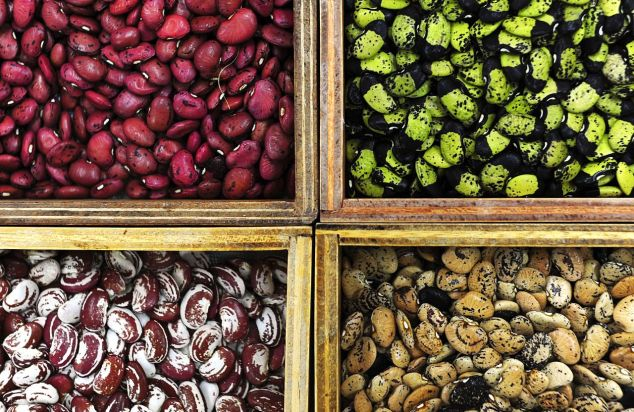 1280px-four_bean_varieties_in_a_gene_bank