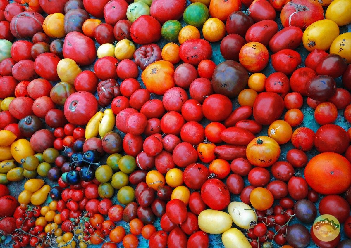 Põlissordid ja seemnete kogumine