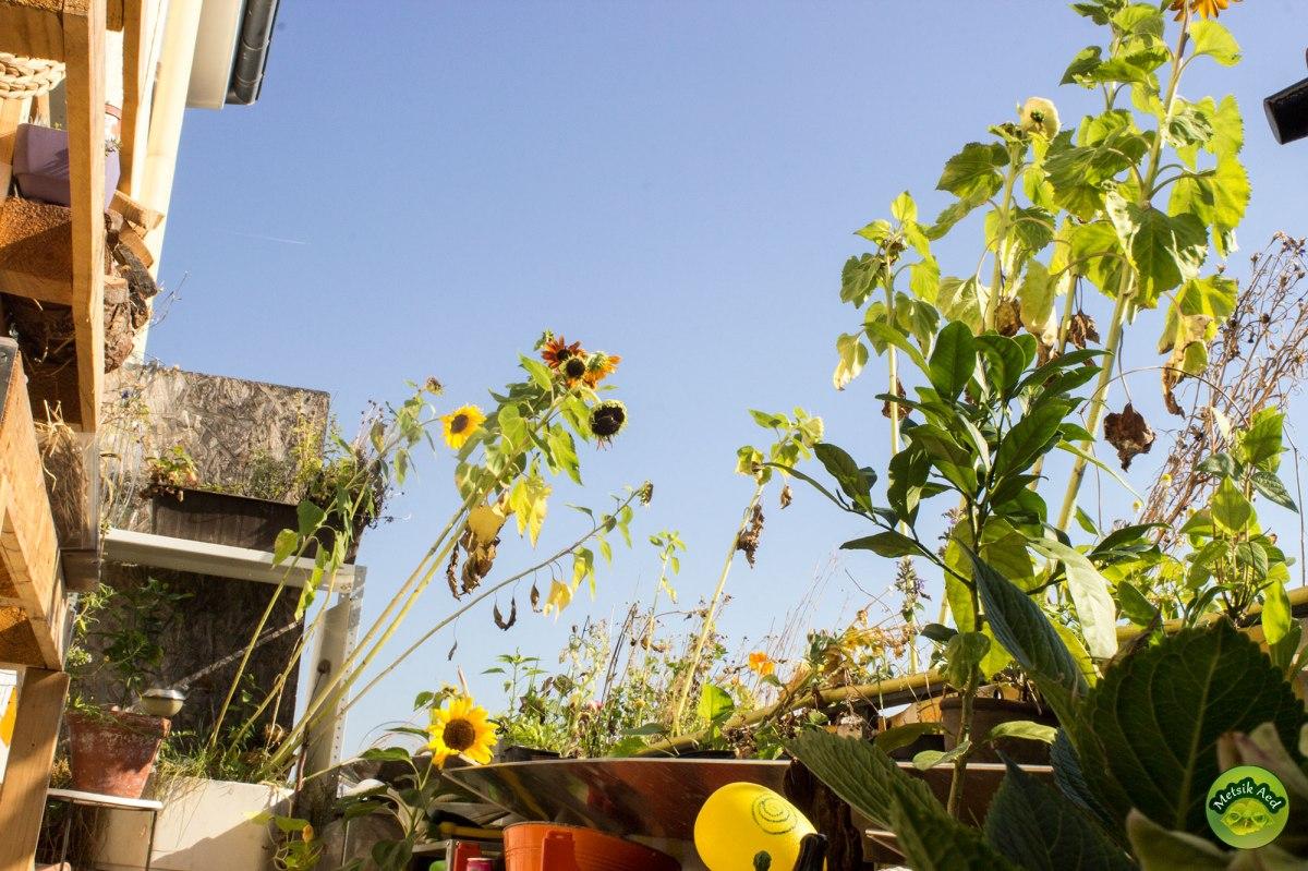 Üle 60 taime väikesel rõdul