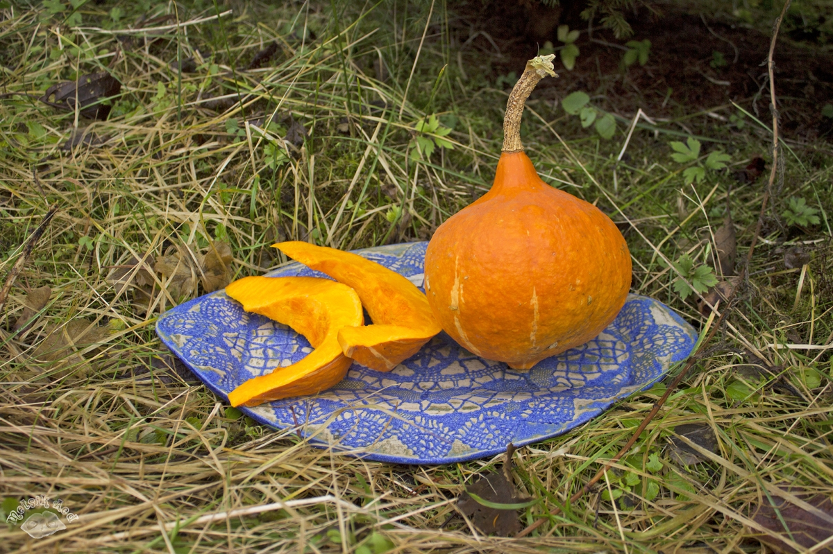Hokkaido ehk apelsinkõrvits