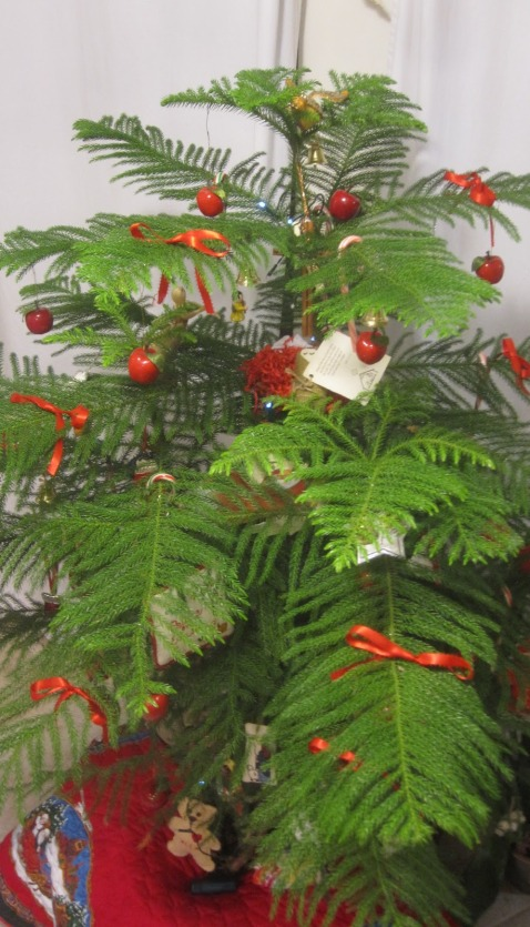 Pildiotsingu indoor plant christmas tree tulemus